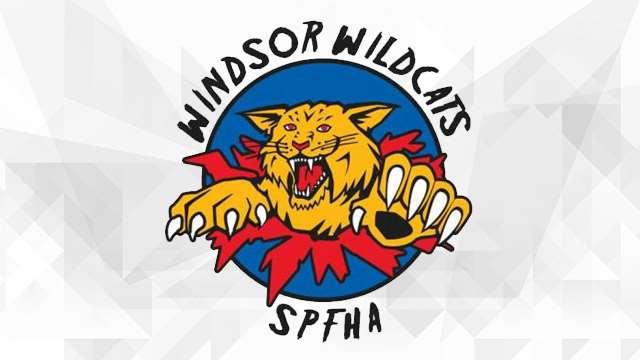 windsor wildcats logo 640??w=640&h=360&q=60&c=3